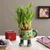 2 Layer Lucky Bamboo In Smiley Mug Green