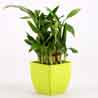 2 Layer Bamboo Plant In Green Melamine Pot